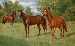 Cheveaux - Paarden