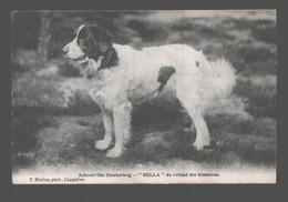 Kalmthout - Schoolvilla Diesterweg - Bella De Vriend Der Kinderen - 1909 - Hond / Chien / Dog - Kalmthout