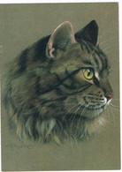 Chat -cat -katze -  Poezen Kop - Chats