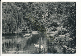 Mosbach - Baden - Im Stadtpark [AA50-4.535 - Non Classificati