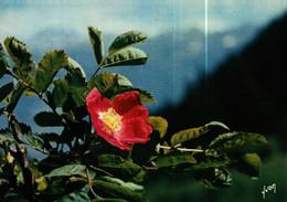 CPSM Editions Yvon    Fleurs De Montagne   ROSIER - Bloemen