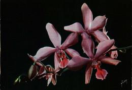 CPSM Editions Yvon 51    Jolies Fleurs De France    ORCHIDEES  (différente) - Bloemen