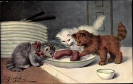 Artiste CPA Sperlich, S., Drei Katzen Am Essen, Würstchen, TSN 6 - Non Classés