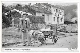 Portugal Madeira Photography Postcard S.Miguel Azores Sheep Card - Açores