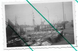 Heist ? Heyst ?  Port De Pêche   Photo 9x6 - Lugares