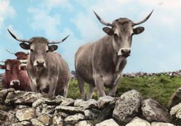 Notre Auvergne Touristique - En Attendant Le Retour à L ' étable - Auvergne