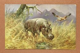 Antique Postcard 1909s By M. Muller. Hippopotamus EAGLE. Wild Nature. Mountains - Hippopotamuses