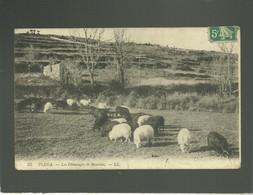 Piana Les Pâturages De Moutons édit. LL N° 35 , Corse - Other Municipalities
