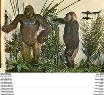 Photo Cpsm Cpm LES GORILLES Du Gabon - Monkeys