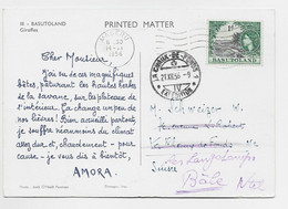 BASUTOLAND 1D SOLO GIRAFFES CARD  PUB AMORA MASERU 14.XI.1956 TO SUISSE - 1933-1964 Colonie Britannique