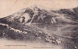 Un Troupeau à DORMILLOUSE (Hautes-Alpes) - Andere Gemeenten