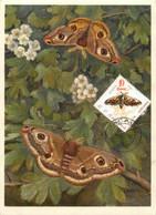 Roumanie Papillons Butterfly Lot De 5 Cartes Maximum Maxicard CM - Cartes-maximum (CM)