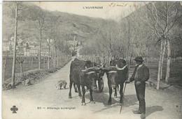Puy De Dome, Types Auvergne : Attelage Auvergnat - Auvergne Types D'Auvergne