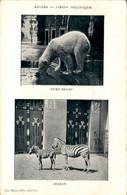 België - Anvers Jardin Zoologique - 1905 - Unclassified