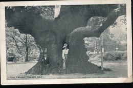 Angleterre ---    The Trunk Major Oak - Altri