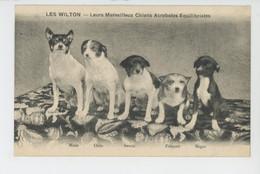 """CHIENS - DOG - SPECTACLE - CIRQUE - """"LES WILTON """" - Chiens Acrobates (représentation Du 16 Février 1923 à BÉDARIEUX ) - Cirque"""