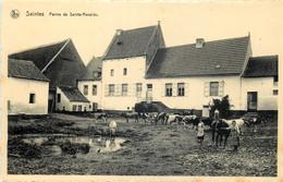 Belgique - Tubize - Saintes - Ferme De Sainte-Renelde - Tubize
