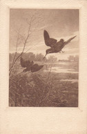 Jagd Hunting  Chasse  Waldschnepfe  Woodcock  Becasse  Snipe  Oiseaux  Sine ED Old Cpa. Ca. 1900 - Caccia