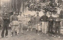 124 Me Territorial Campagne 1914 , Militaires Avec Boeuf - Regimientos