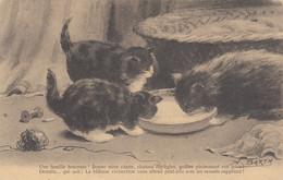 CHATS: Une Famille Heureuse (Ligue De Défense Des Animaux De Dijon) - Cats