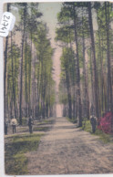 RUSSIE- FORET RUSSE- RECT/VERSO - Russie