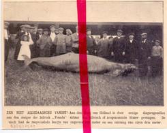 Orig. Knipsel Coupure Tijdschrift Magazine - Hoek Van Holland - Gevangen Hilvis  - 1911 - Ohne Zuordnung