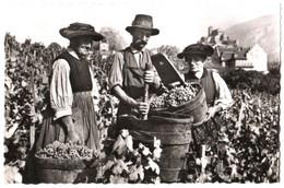 CPSM Suisse (Valais) Sion - Vendanges En Valais TBE éd. R. Schmid à Sion - Vignes, Viticulture, Raisin, Vin - VS Valais