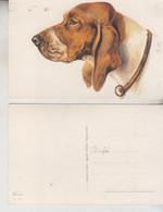 CANI DOG CHIEN  CANE CHIEN  MUSO IN PRIMO PIANO ILLUSTRATA NORFINL  NO VG - Hunde