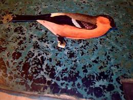 Vieux Papier Chromos Dècoupis Biscotte Biscuits Parè Theme Oiseaux  N°19 Le Bouvreuil Pivoine - Other