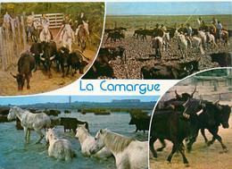CPSM Camargue-Multivues-Timbre    L899 - Unclassified