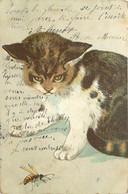 Fantaisie - Le Chat Contrattaque - Animaux Habillés