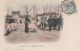CPA (81) MAZAMET  Le Marché Aux Cochons Porc Pig Paysan  2 Scans - Mazamet