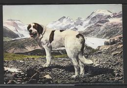Carte P ( Chien Du Grand-Saint-Bernard ) - VS Valais