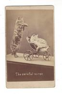 """CDV Photo Chat  Poussette  """" The Careful Nurse  """" , éd; H. Pointer  , Brighton - Antiche (ante 1900)"""
