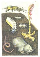 Z.Vorontsova:Mole, Worm, Grasshopper, Bugs, 1987 - Other