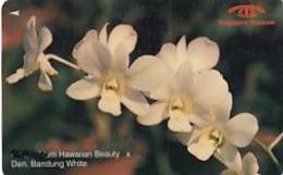 SINGAPORE(GPT) - Orchids/Dendrobium Hawaiian Beauty, CN : 16SIGC/B(normal 0), Used - Fiori