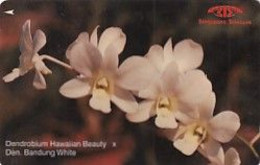 SINGAPORE(GPT) - Orchids/Dendrobium Hawaiian Beauty, CN : 11SIGC, Used - Fiori
