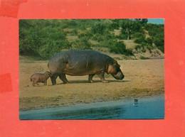 IPPOPOTAMI-FDC - Hippopotamuses