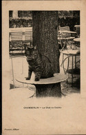 Chat , La Chat Du Casino- Cat -katze - Poes Op Tafel Aan Boom - Chats