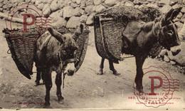 65 : Pyrénées - Types Pyrénéens - Moyens De Locomotion En Haute Montagne   ANE DONKEY FRANCE - Altri Comuni