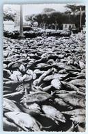 Carte Postale : 64 SAINT-JEAN DE LUZ : Les Thons, Une Pêche Miraculeuse, Timbre En 1956 - Saint Jean De Luz