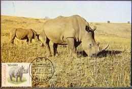 Mozambique - Maximum Card MC 1976 Fauna Rhinoceros Chitengo - Rhinoceros