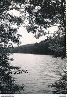 57) BITCHE : Carte-photo - L'étang D'Hasselfurth (avril 1954) - - Bitche
