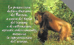 CARTE-MAGNETIQUE-ITALIE-5€-OURANG-OUTAN-2002-RARE - Giungla