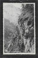 AK 0782  Höllengebirge - Schafluckenstieg / Partie Um 1955 - Attersee-Orte