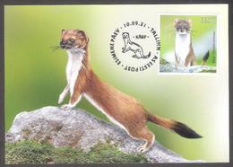Estonian Fauna – The Stoat Estonia 2021 Stamp Maxicard Mi 1020 - Estonie