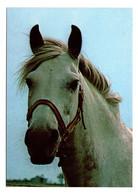 Cheval Horse Editions Grafiche Biondetti - Paarden
