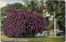 1940circa-Hawaii Bougainvillea Vine - Zonder Classificatie
