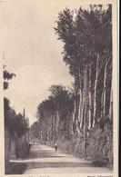 22 Cpa Cambo Les Bains  Cambo Cambo Les  Thermes - 5 - 99 Postkaarten