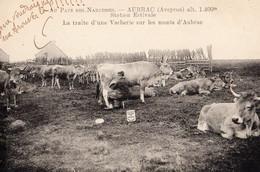 Au Pays Des Narcisses - AUBRAC - Station Estivale - La Traite D'une Vacherie Sur Les Monts D'Aubrac - Other Municipalities